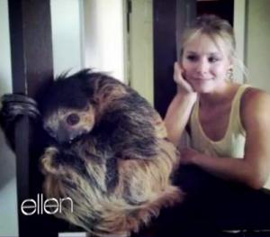 Llama sloth